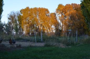 Fall (2)
