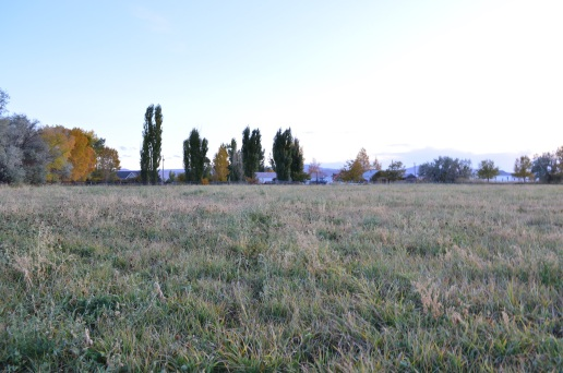Fall (22)